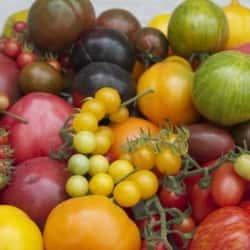 Tomaten: Ausstellung mit Vorträgen und Verkostung im Odenwälder Freilandmuseum e.V. am 29.8.2021