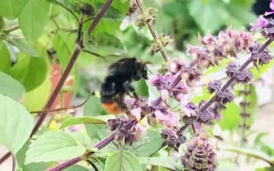 Bienen, Hummeln und Schmetterlinge…