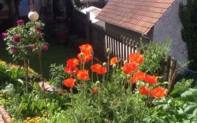 Auszeit im Gartenparadies