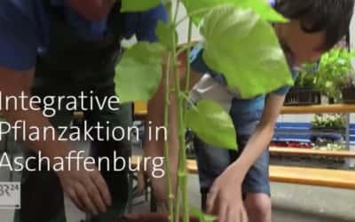 Pflanzaktion auf dem Schulhof: Erfahrungen für alle Sinne
