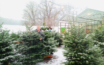 Langer Weihnachtsbaumverkauf am 3. Adventssamstag und -sonntag 12./13.12.2020